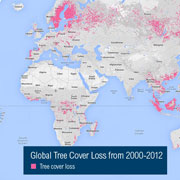 Mapa Global Forest Watch./ @GFW