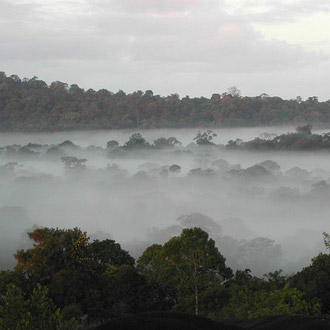 Amazonas./ @ Diario ecología