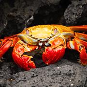 La cantidad de especies exóticas invasoras sigue y continuará creciendo