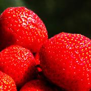 La vida de las fresas se alargará un 40% más