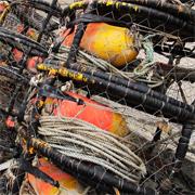 Los costes de la pesca ilegal alcanzan los <br>23.000 millones de dólares al año./@stock.xchng