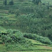Restaurar áreas deterioradas y deforestadas<br> no significa sólo plantar árboles.