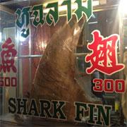 CITES incluirá varias especies<br>de tiburones y rayas./@WWF